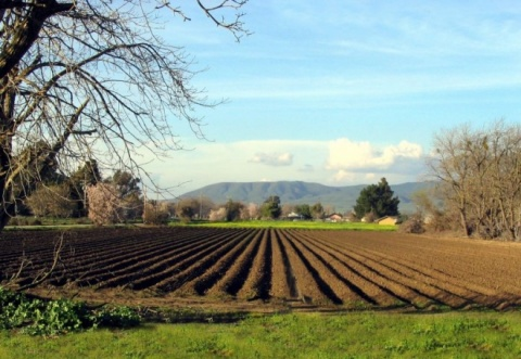 How much does agricultural land cost and how to set the prices?