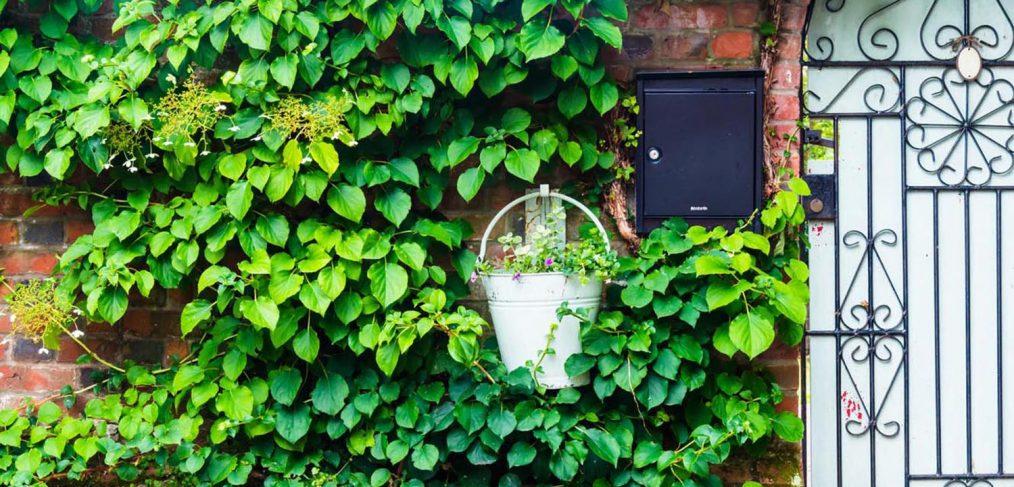 Flori perfecte pentru gradina casei tale